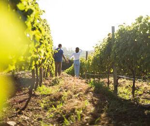 La culture viticole